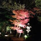 紅葉見頃の六義園、ライトアップ。