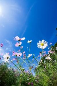sky_flower