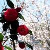 デジタルシングル「何度でも花が咲くように私を生きよう」とアルバム「魂リク」はステキな置き土産。