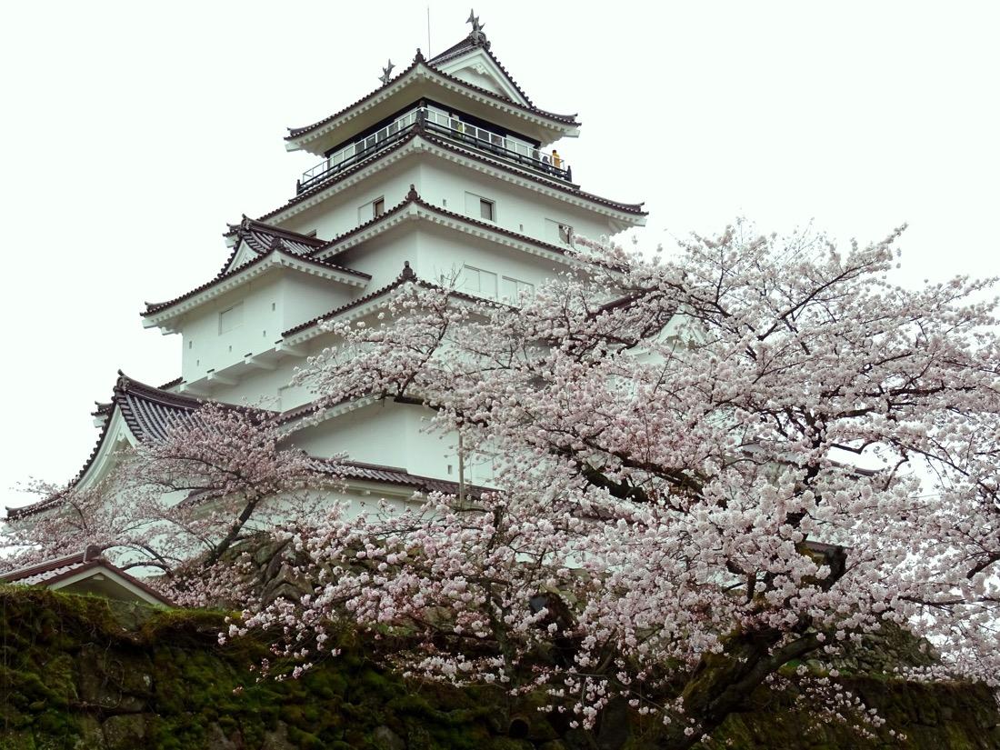 鶴ヶ城の桜・斜めから