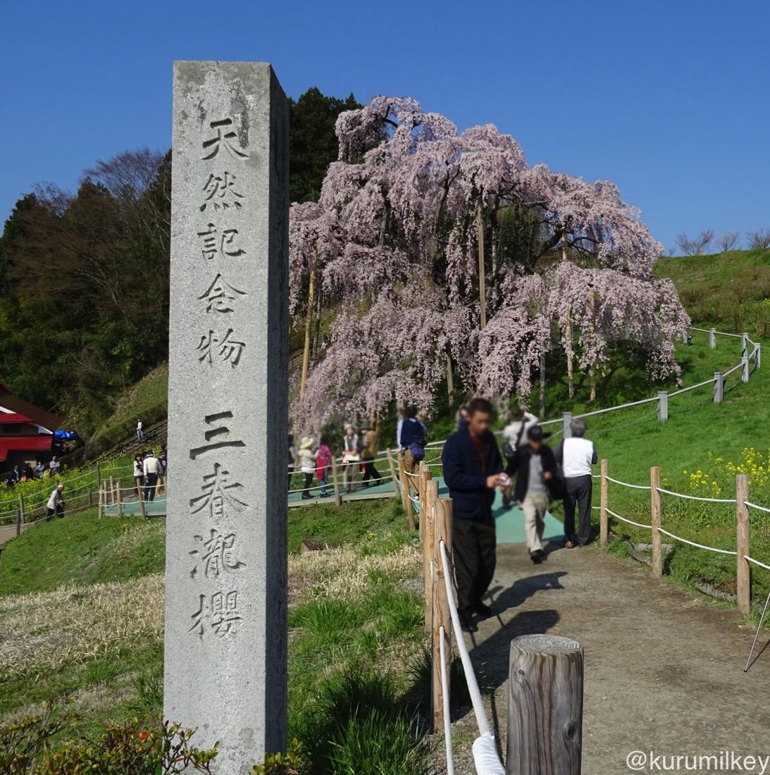 滝桜の石碑