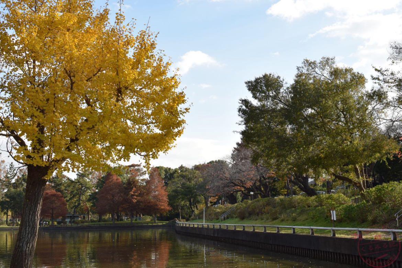 水元公園の黄色い木
