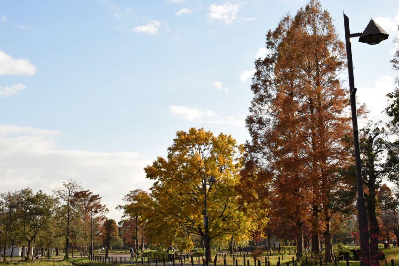 茶色く色づく樹々